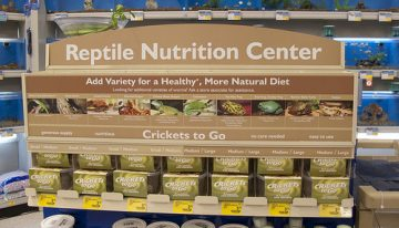 Nutrition Ideas: Reside A Wholesome Life